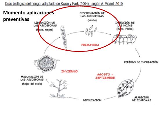 diagráma ciclo de la enfermedad